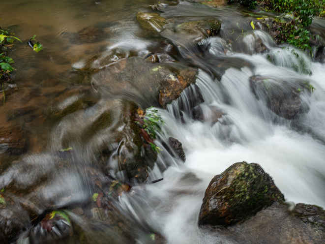 Forest streams in the rainforest