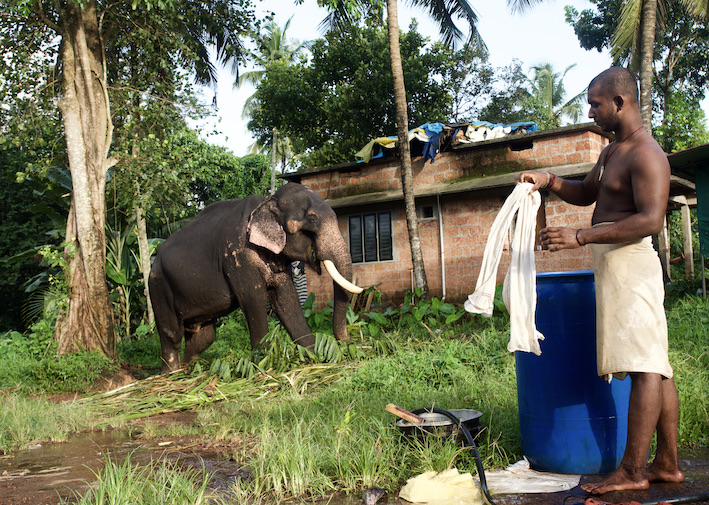 Elephant with mahout