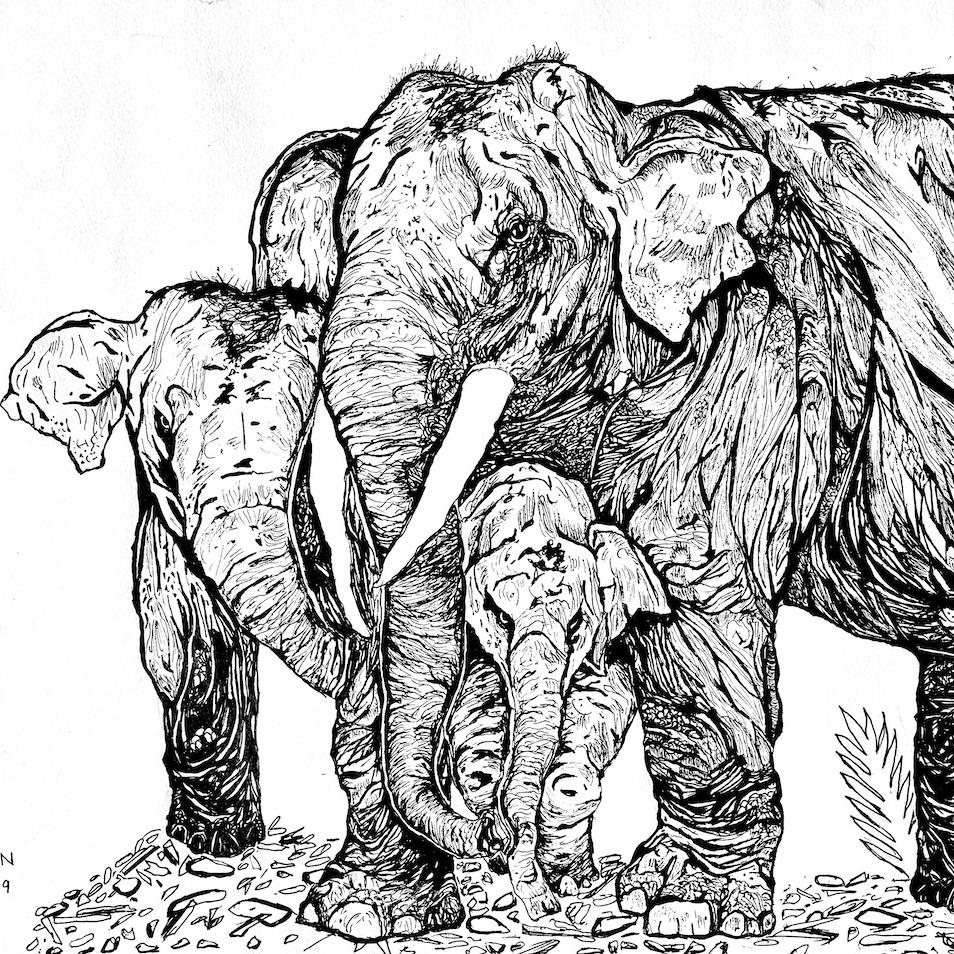 The Elephant Herd Pen Sketch