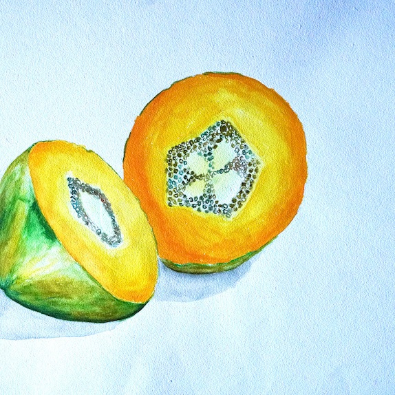 Papaya Watercolour Painting