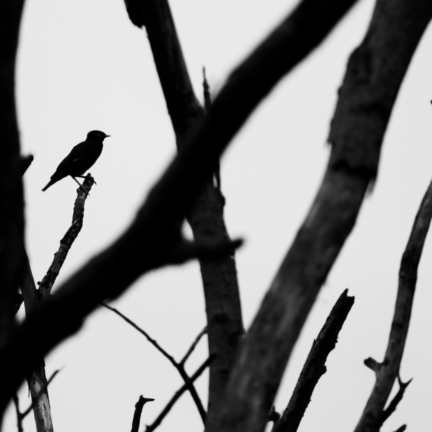 Bird silhouette through the trees.