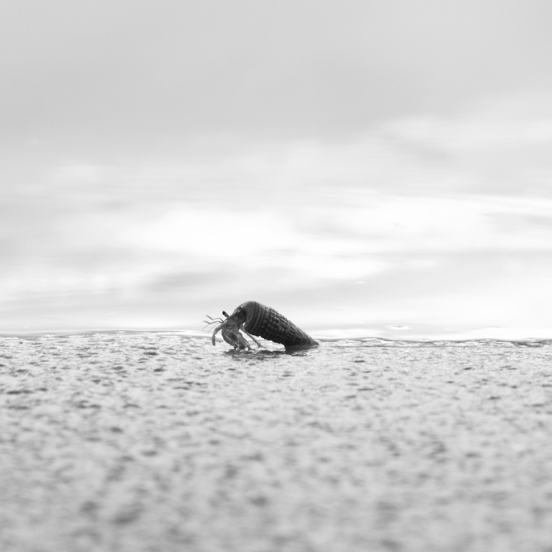 A hermit crab walking along the shore.