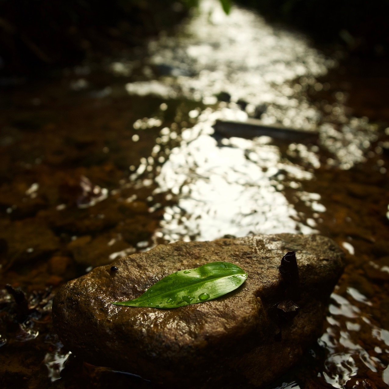 Leaf on a rock in a Stream