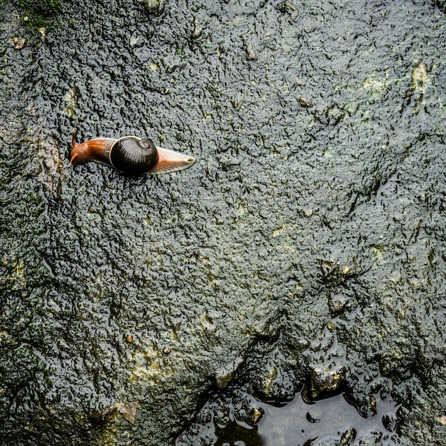 Snail on Mossy Wall