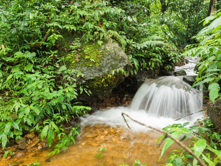 Long exposure of a forest stream from Munnar, Kerala, India.