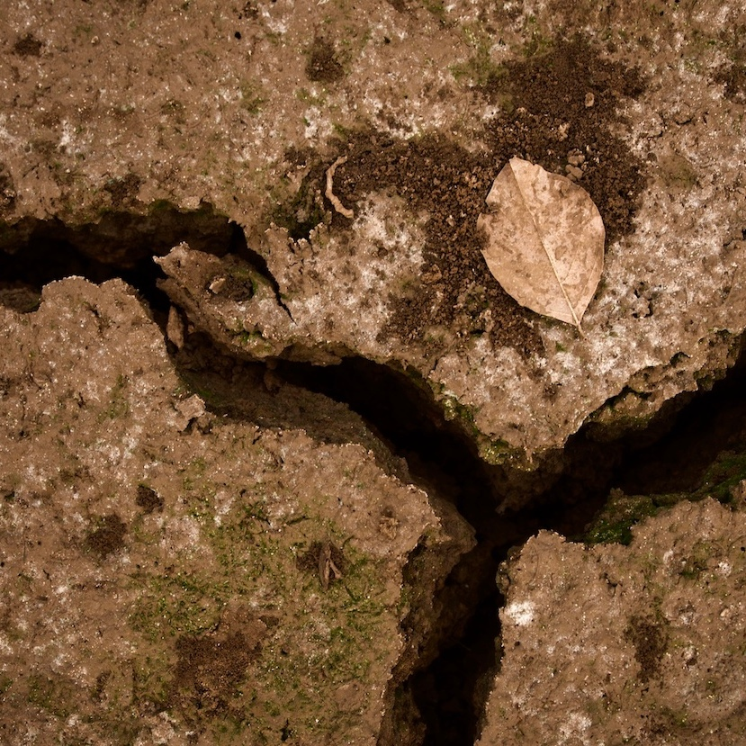 Dry earth with a dry leaf