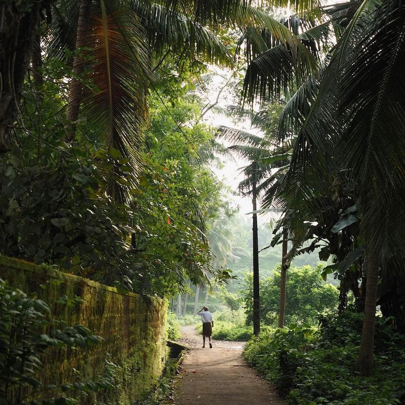 Man walking in tree tunnel. Shot in Kozhikode, Kerala, India