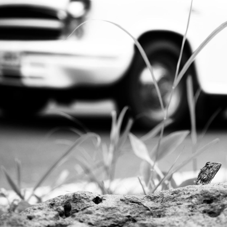 Lizard looking up at Car.