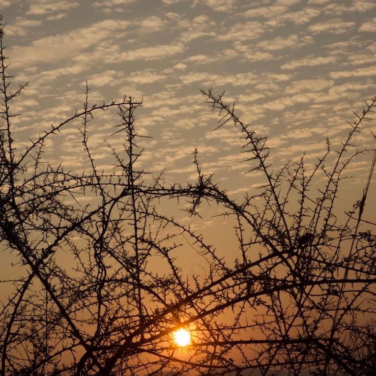 Maze of Thorns. Shot in Rishi Valley, Andhra Pradesh, India.